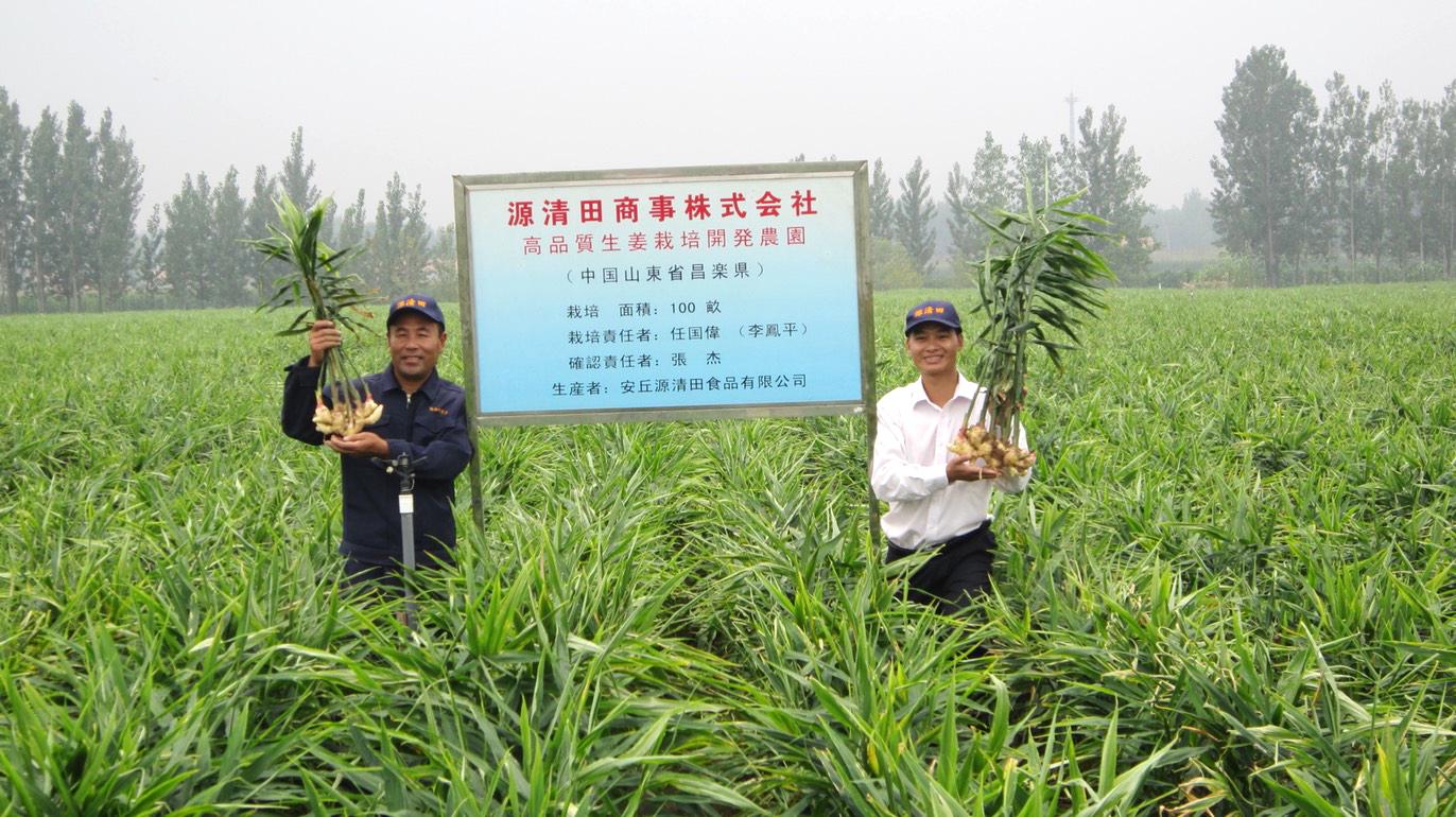 水質検査・土壌改良にも取り組み土づくりから手掛けた中国の生姜畑